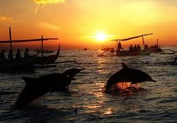 See the dolphins in Lovina