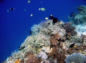 Don't miss diving at Menjangan Island while you are in Bali