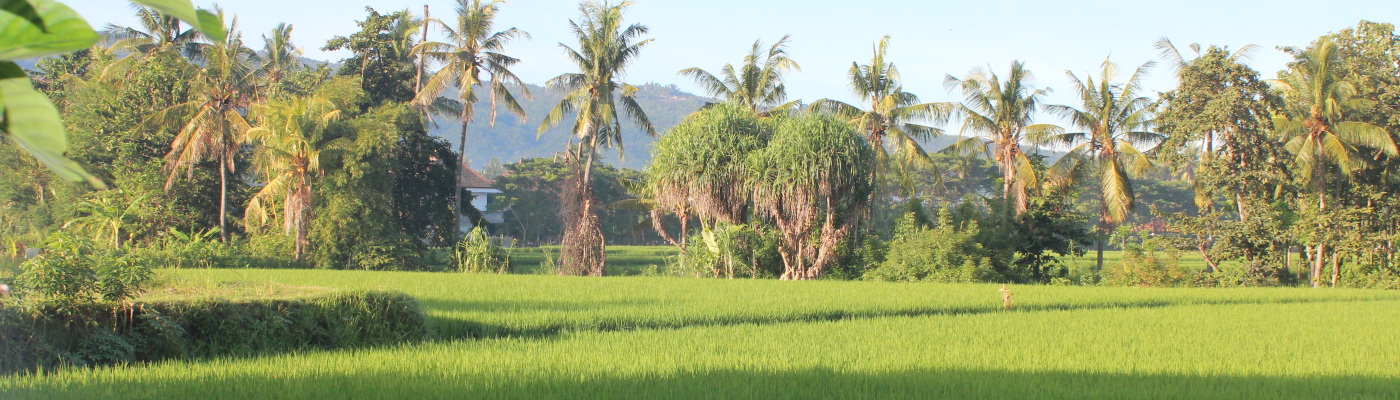Ricefield views